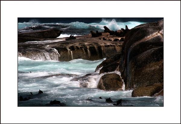 seal island by Eden