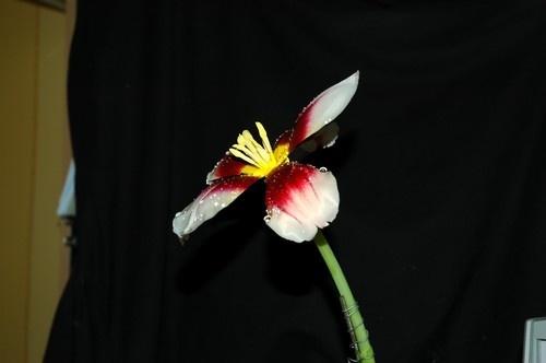Flower Power. by sunshot