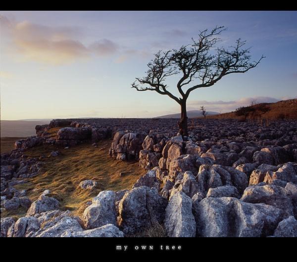 my own tree by paulrankin