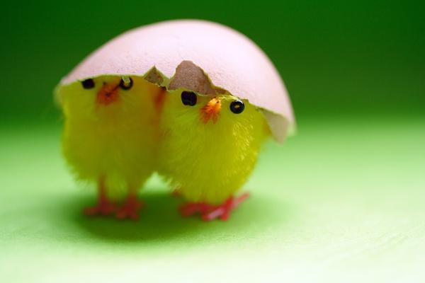 Hatchlings by SamM