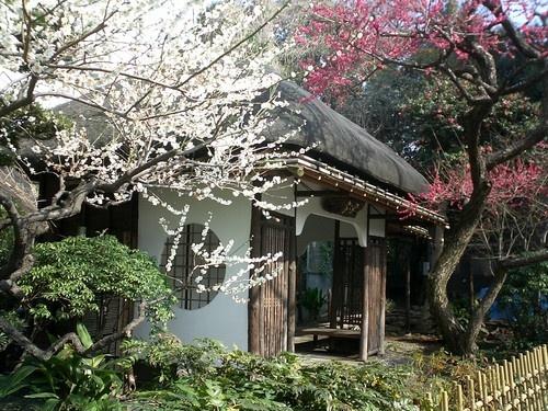 Cherry Blossom Tea House by EMMA1