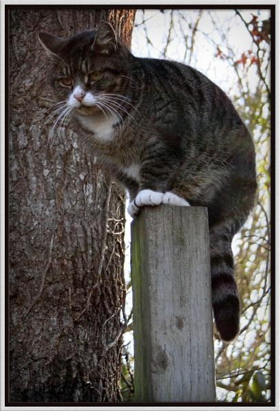 Cat on a Stick by bricjen