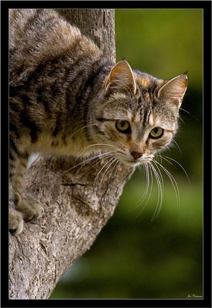 Tree Cat by KingArthur