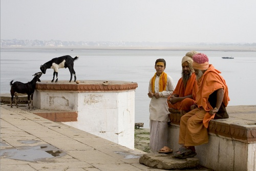 Sadhu and Goats on the bank of the Ganges river by DirkV