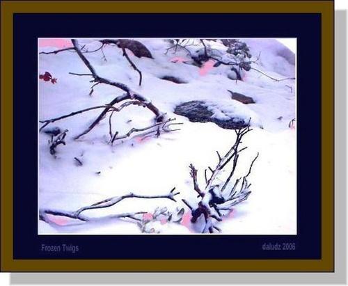 Frozen Twigs by LourdesV