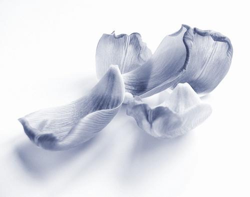 Petals by Nade
