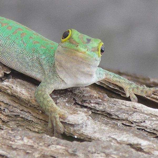 That lizard again by hughscott