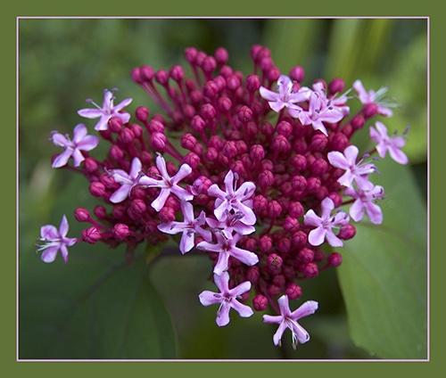 Flowers 2 by paul_ec