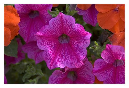 Flowers 3 by paul_ec