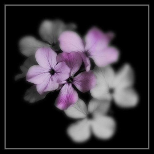 Purple by Cowbags