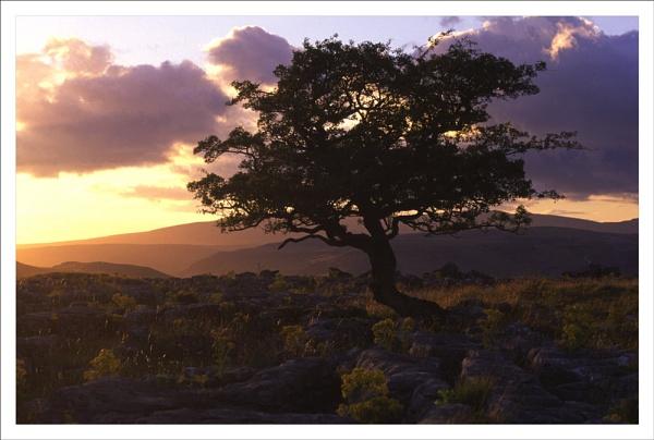 Hawthorne Sunset, Winskill stones W Yorkshire. by rontear