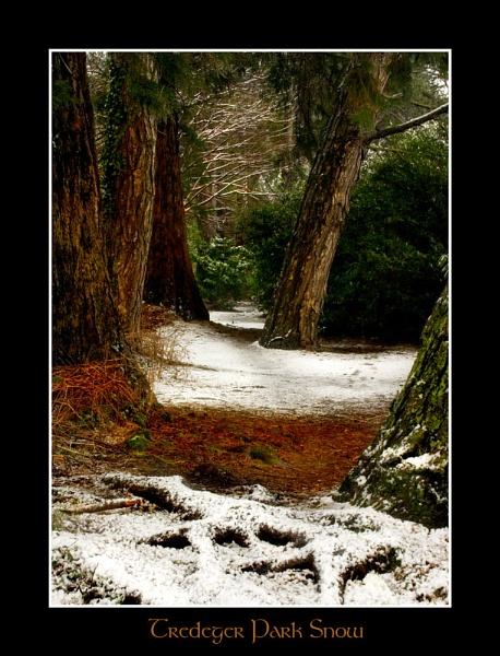 Snowy Wood by pontybiker