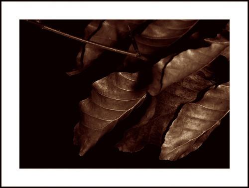 Copper Beech by Tom_H