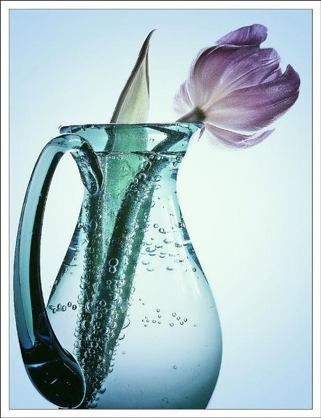 in a vase by jacquienewsham
