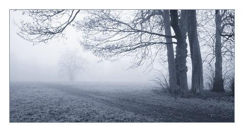 Foggy Landscape by JohnHorne