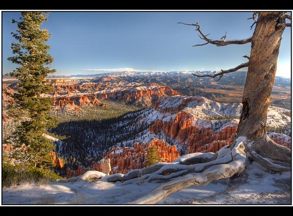 Bryce Canyon Snow by TonyA