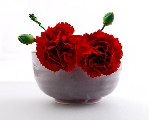 Carnations by gmontambault