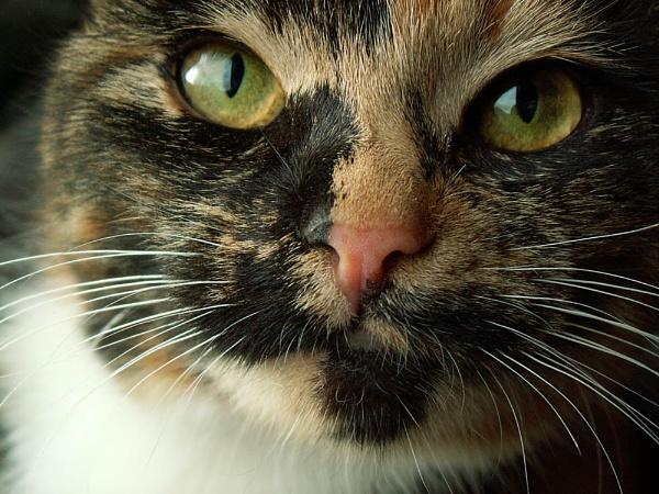 Stumpy Kitten by RachelMB