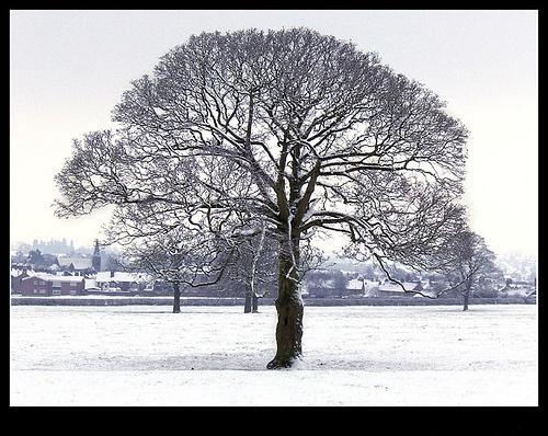 Snowy Tree by Deego