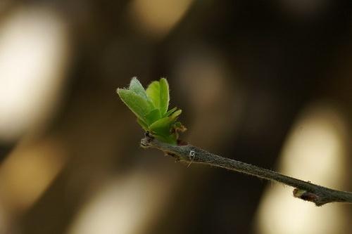New Life by museebfoto