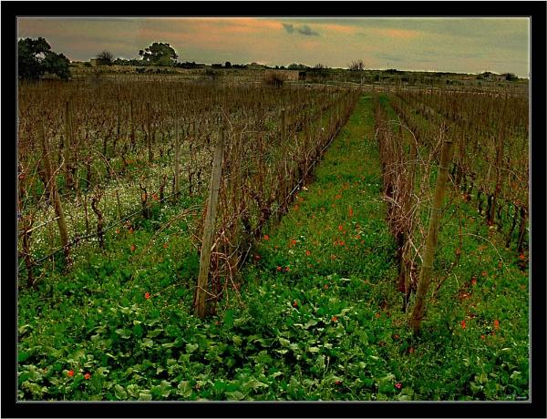 Vineyard by KingArthur