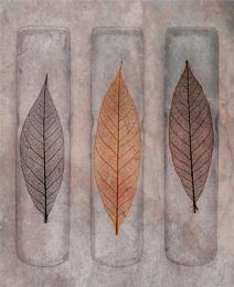 feuilles sur la glace