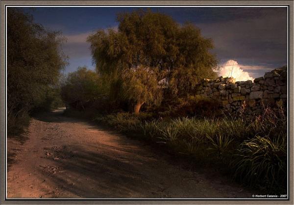 Sprinkle of Light by BertC