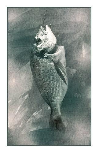 Fish by Shortbloke