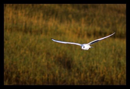 in flight by juliejump
