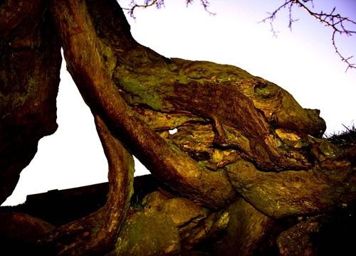 Tree by dale789
