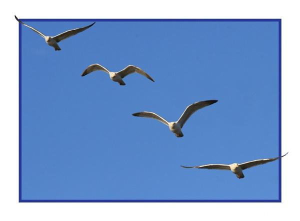 Seagulls by hughscott