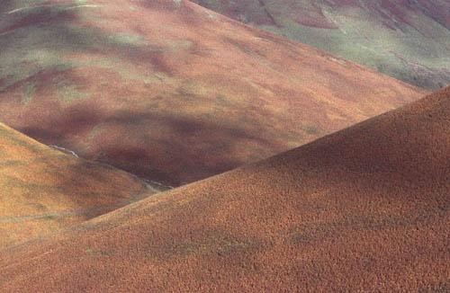 Abstract Landscape by Derek3755
