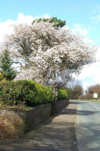 Spring is HERE by pgurnett