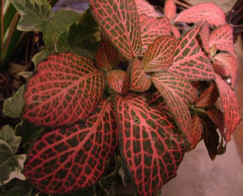 Pretty plant by sammyboy