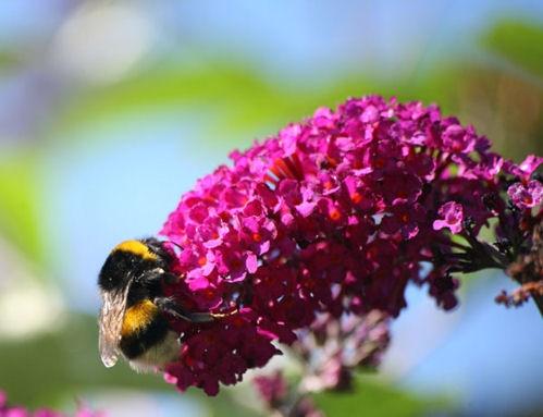 Bumble Bee by Bucks