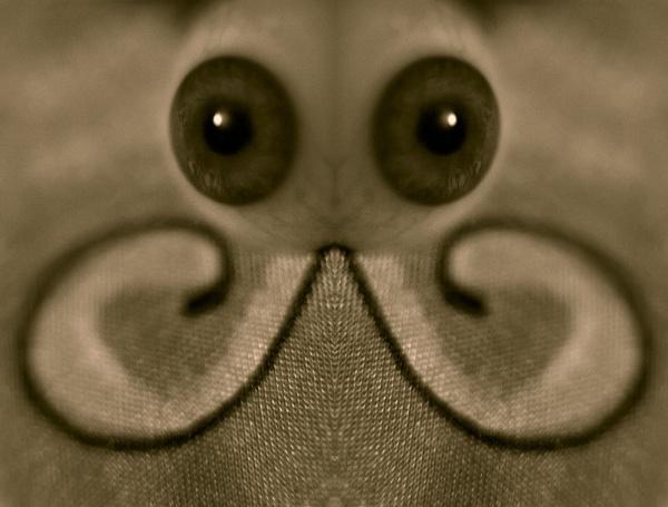 Butterfl-eye by deviant