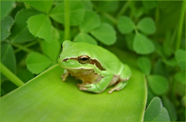 Fourth Frog and Still Counting by exposure
