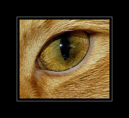 odin\'s eye (left) by macdaniel