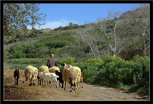 The Shepherd by KingArthur