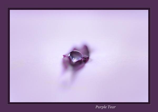 Purple Tear by BillN
