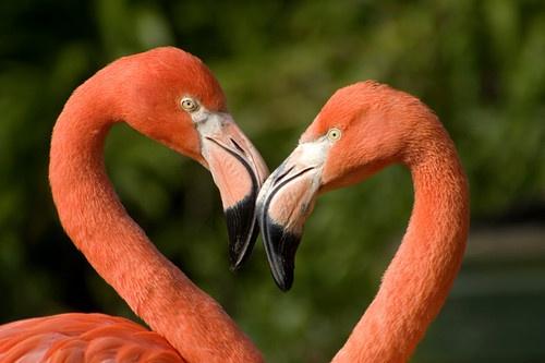 Flamingo love by Blueprint