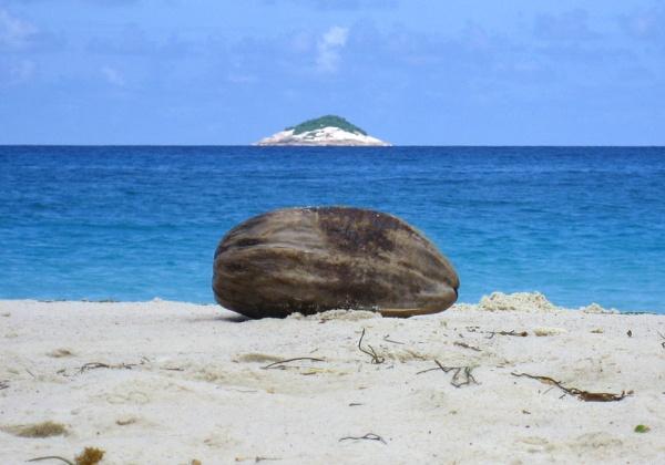 Coconut by hughscott