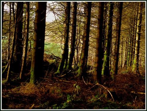 Inside Bilbo\'s Mansion by Bowline