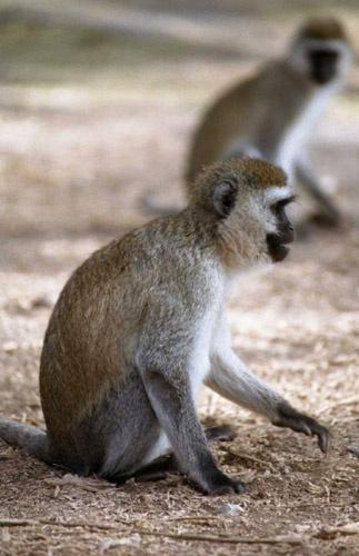 Just monkeys by Mo_W