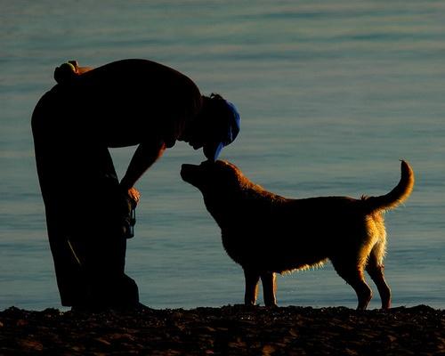 man\'s best friend by jmbphoto