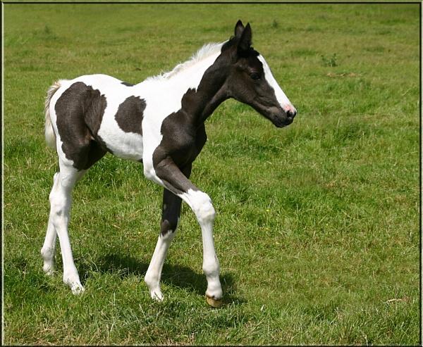 Foal by una