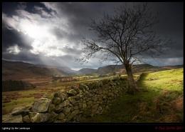Lighting Up the Landscape