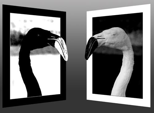 Flamingos!! by simonshere