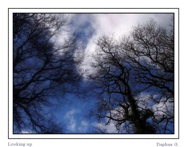 Looking up by daringdaphne