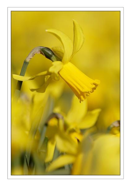 Yellow...... by ejtumman